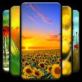 4K Flower Wallpaper