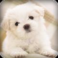 App Cute Puppy Live Wallpaper APK for Kindle