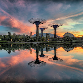 by Gordon Koh - City,  Street & Park  City Parks ( clouds, reflection, garden by the bay, supertrees, riverfront, super trees, asia, trees, dramatic sunrise, symmetry, travel )