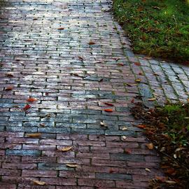 Brick sidewalk with leaves by Martin Stepalavich - City,  Street & Park  Neighborhoods