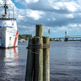 River Front Wilmington by Thomas Shaw - Landscapes Waterscapes ( water, clouds, building, wood, waterscape, wilmington, ship, white, boat, north carolina, cape fear river, bird, red, sky, blue, trees, bridge, sea gull, downtown, river )