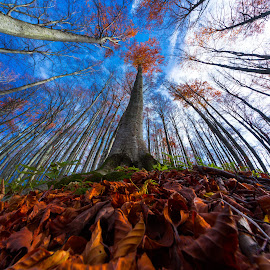 Beech tre by Stanislav Horacek - Nature Up Close Trees & Bushes