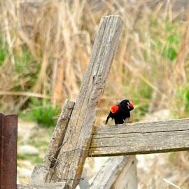 by Teresa Menard - Novices Only Wildlife