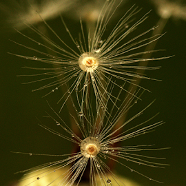 by Laimonas Šepetys - Abstract Macro