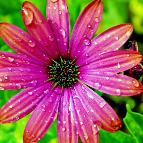 Raindrops by Sara Swanson - Nature Up Close Flowers - 2011-2013