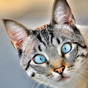 by Twanny Chicharito Falzon - Animals - Cats Portraits (  )