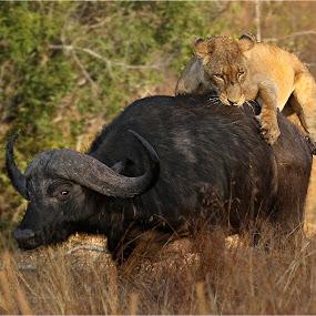 by Geo Jooste - Animals Other Mammals