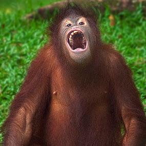 Smile by Harris Daniel - Animals Other Mammals