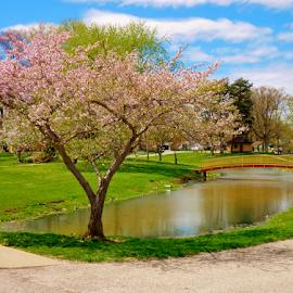 by Steve Smith - City,  Street & Park  City Parks