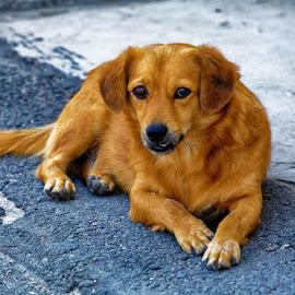 On seaside by Radu Eftimie - Animals - Dogs Portraits ( sea, beach, dog )