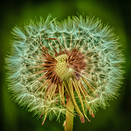 by Dragan Rakocevic - Nature Up Close Other plants (  )