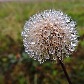 kapky z mlhy by Jana Kubínová - Nature Up Close Natural Waterdrops