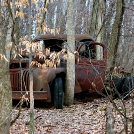 Old Banger  by MaryKathryn Zuza - Transportation Automobiles ( old, overgrown, truck, rusted, banger, woods, old truck, antique,  )