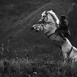 Fly by Andy Kurniawan - Animals Horses ( indonesia, horse, java, bromo, people )