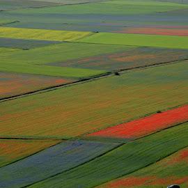 Castelluccio 20 by Bruno Brunetti - Landscapes Prairies, Meadows & Fields ( nature, colors, flowers, italy, castelluccio,  )