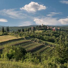 Oprtalj by Dubravka Krickic - Landscapes Travel ( clouds, hills, oprtalj, sky, vineyards, croatia, town, small )