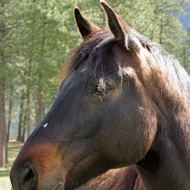 Handsome by Giselle Pierce - Animals Horses ( horse head )