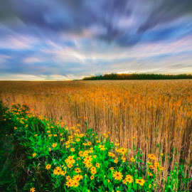 The Calm Before The Storm by Dragan Milovanovic - Landscapes Prairies, Meadows & Fields