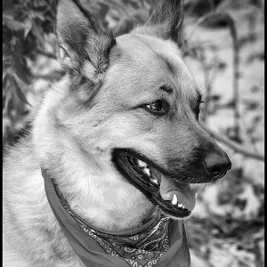 Shepherd-23.jpg