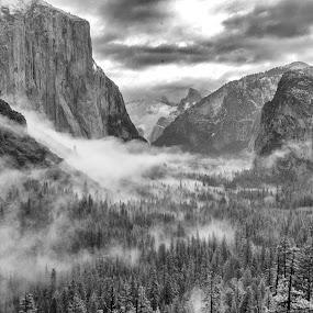 Yosemite  by Randi Hodson - Landscapes Mountains & Hills ( mountains, black and white, fog, yosemite,  )