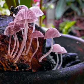 LITTLE UMBRELLAS by Rogz Necesito Jr. - Nature Up Close Mushrooms & Fungi