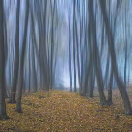 Into the woods by Sinisa Plevnik - Landscapes Forests ( art, way, forest, road, blur, ambient, woods, tree, nature, autumn, fog, path, trees, nature photography, motion, misty, mist )