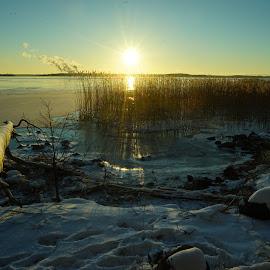 Winter scene by Alf Winnaess - Uncategorized All Uncategorized
