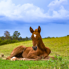 Snooze Before the Storm by Sarah Sullivan - Animals Horses