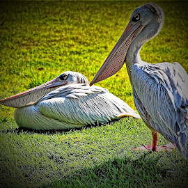 Sisters Stork  by Darrell Tenpenny - Digital Art Animals ( water, bird, stork, summer, sea, lake, animal )