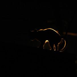 Feline Streetlight Silhouette by Eugenio Sebastian - Animals - Cats Portraits ( cats, streetlight, silhouette, neighborhood, low light, stray cat, night shot, friendly feline )