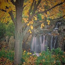 Jesen u sumi. Autor Nermin Nerko Mulabdic by Nermin Nerko Mulabdic - Digital Art Places