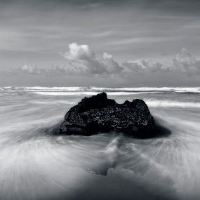 The Stump by David Benedict - Landscapes Beaches (  )