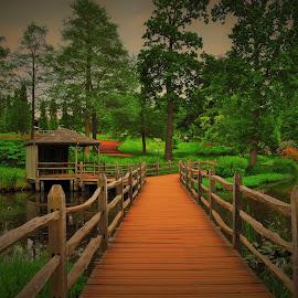 Bridge over the lake, Savill Garden by Ian Harvey-Brown - City,  Street & Park  City Parks