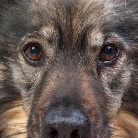 dog up close by Dominique Walraven - Animals - Dogs Portraits ( dog portrait, dog, close up,  )