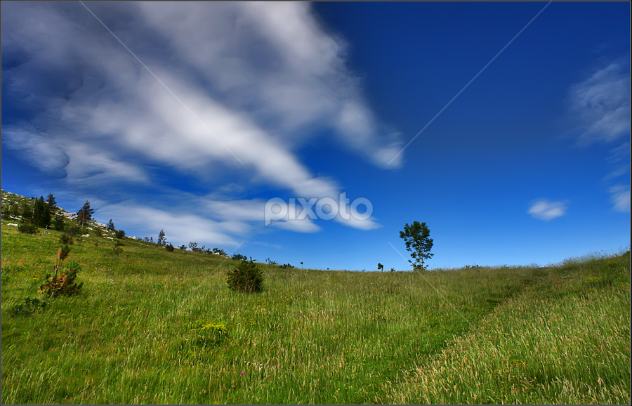 Green grass  by Simon Kovacic - Landscapes Prairies, Meadows & Fields ( field, sky, tree, grass, blue, green, meadow,  )