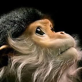 God Bless by Cheri McEachin - Animals Other Mammals