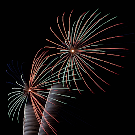 Electric Palms by Tom Whitney - Public Holidays July 4th ( red, sparkle, palm tree, firework, green, light, palm, tree, black, vertical, fireworks, wind,  )