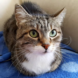Batik the Kitten by M. Haluk Saran - Animals - Cats Kittens ( tame, cat, tabby cat, meow, cute cat, cute, tabby, kitty, domestic animal )