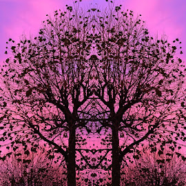 Sunset Trees Magic by June Ross - Digital Art Abstract ( colour, sunset, silhouette, art, trees, photoshop )