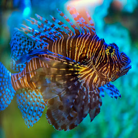 by Stanley P. - Animals Fish