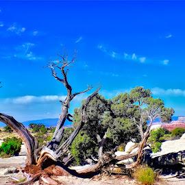 Desert sky by Bruce Newman - Landscapes Deserts ( landscape photography, nature, dead tree, dramatic, desert landscape,  )