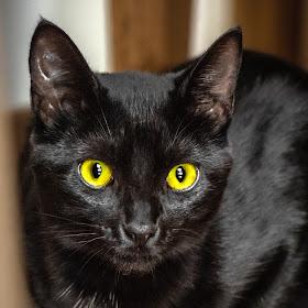 Black-Cat_HDRT.jpg