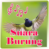 Download  Suara Burung  Apk