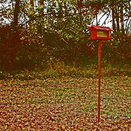 Autumn Bird Feeder by Daryl Peck - Novices Only Objects & Still Life ( novice, autumn, bird feeder, fall, object )