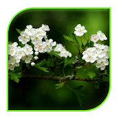 App white flowers Live wallpaper APK for Kindle