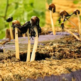 by Ashley Sharber - Nature Up Close Mushrooms & Fungi ( mushroom, purple, log, mushrooms )