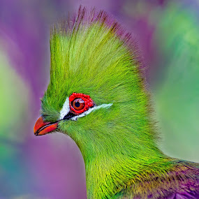 by Judy Rosanno - Animals Birds ( san antonio zoo,  )