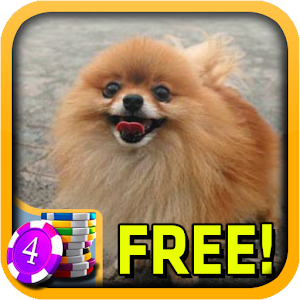 Download 3D Pomeranian Slots For PC Windows and Mac