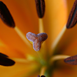 by Solomon Aseoche - Flowers Single Flower ( macro, nature up close, close up, flower )