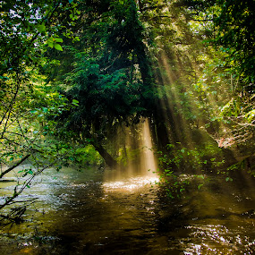 After the Storm #1 by Christopher Burnett - Landscapes Waterscapes ( creek, shafts of light, forest, pwcsunbeams, river, mist )